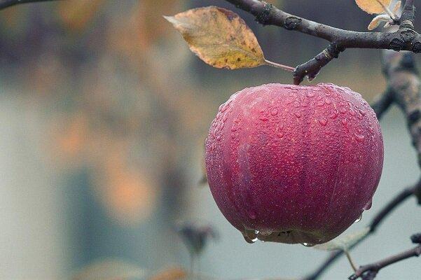 تولید پوشش خوراکی برای بهبود ماندگاری میوهها