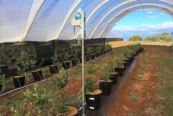 کشاورزان با هوش مصنوعی کاشت محصولات را مدیریت می کنند