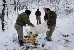 مدیریت بحران برف مانع از وارد آمدن آسیب به حیات وحش خلخال شد