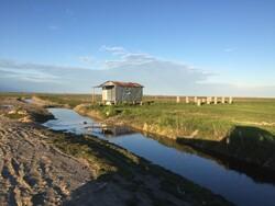 زمینخواری گسترده در میانکاله/ تصرف پناهگاه حیات وحش با سند اصلاحات ارضی