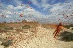 چهارمین محموله تجهیزات مقابله با ملخ صحرایی تحویل ایران شد