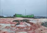 تصاویر برف صورتی در قطب جنوب منتشر شد