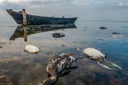 علت اصلی مرگ و میر غیرطبیعی پرندگان مهاجر در خلیج گرگان مشخص شد