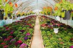 ۱۰ شهرک گلخانه ای در یزد احداث می شود
