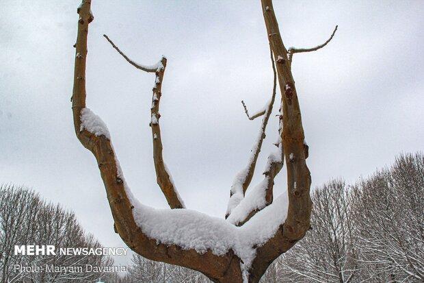طبیعت برفی بجنورد
