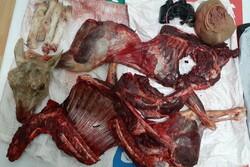 دستگیری شکارچیان متخلف در مجن/ لاشه گوسفند وحشی کشف شد