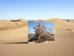 "A photo from Gohar Dashti's series ""Land/s""."