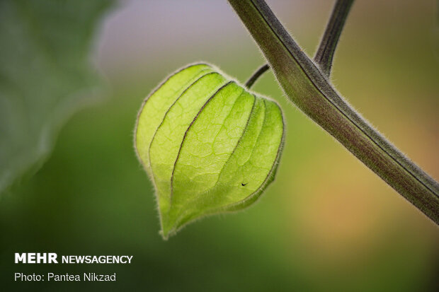 سقف سبز زندگی