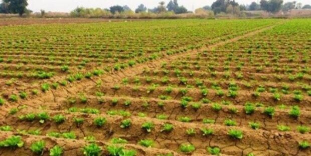 کشاورزان خوزستانی همکاری لازم را در کشت تابستانه داشته باشند