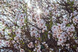 Yezd eyaletinde ilkbahar manzaraları
