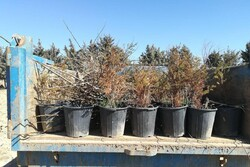 ۱۴ نوع گونه درختی طی هفته منابع طبیعی در مهدیشهر توزیع میشود