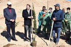 آئین روز درختکاری در شاهرود برگزار شد