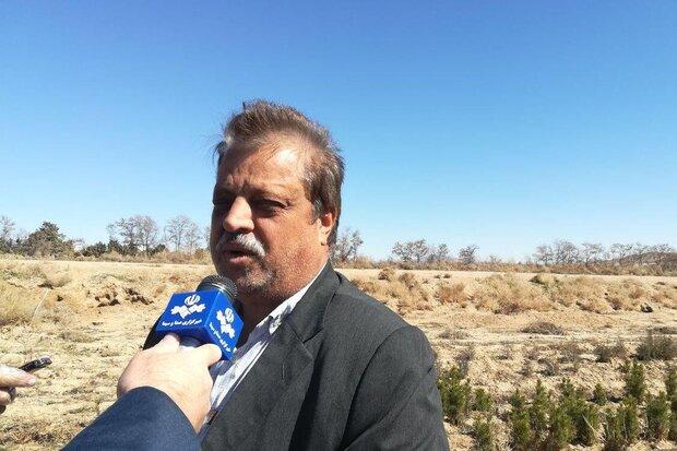 ۴۰۰ هزار اصله نهال برای درختکاری در استان سمنان آماده توزیع است