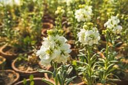 Bucnurd kenti bahara hazırlanıyor