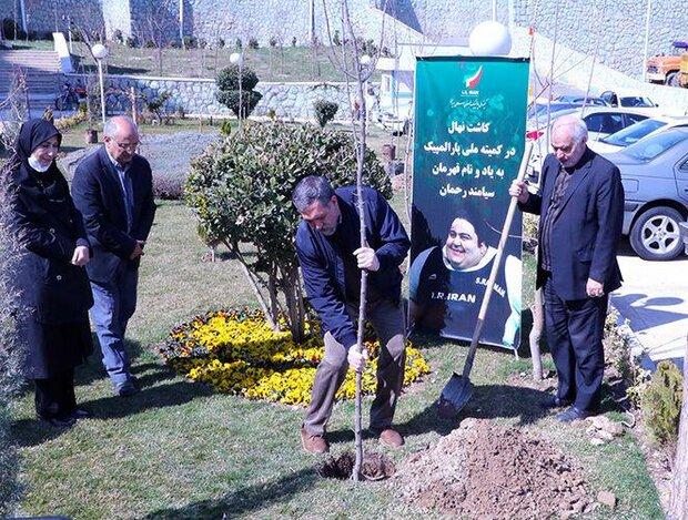 Iran's NPC plants sapling in honor of Siamand Rahman