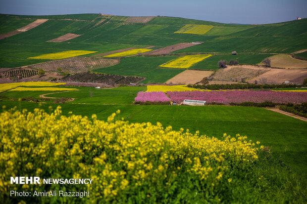 ازهار الربیع فی محافظة مازندران