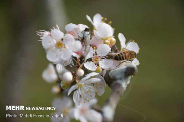 ilkbahar