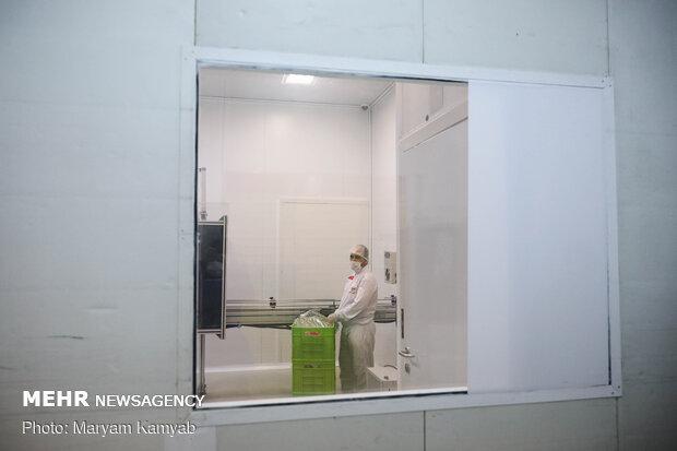 کارخانجات تولید ماسک و مواد ضدعفونی کننده هلال احمر