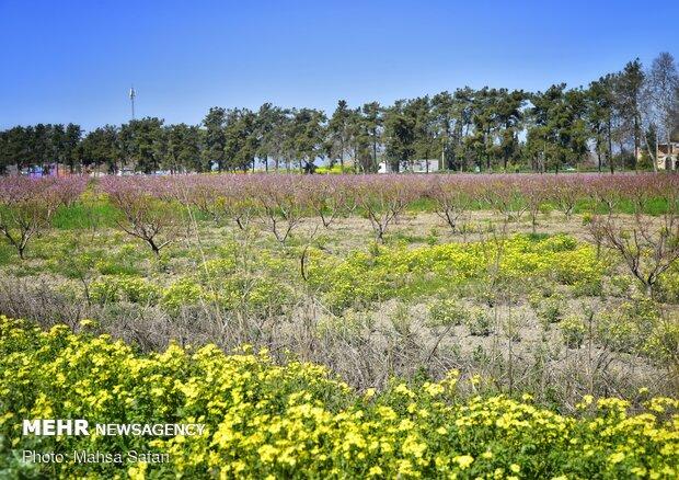 İlkbaharın gelişini yansıtan fotoğraflar