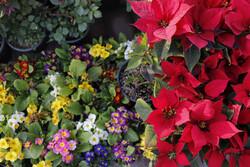 چشم انداز گلهای زیبای بهاری در گوشه و کنار شهر جهانی