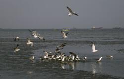 بندر عباس کے ساحل پر ماہی خوار پرندے