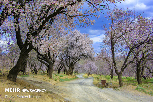 Spring blossoms in Chaharmahal and Bakhtiari Province