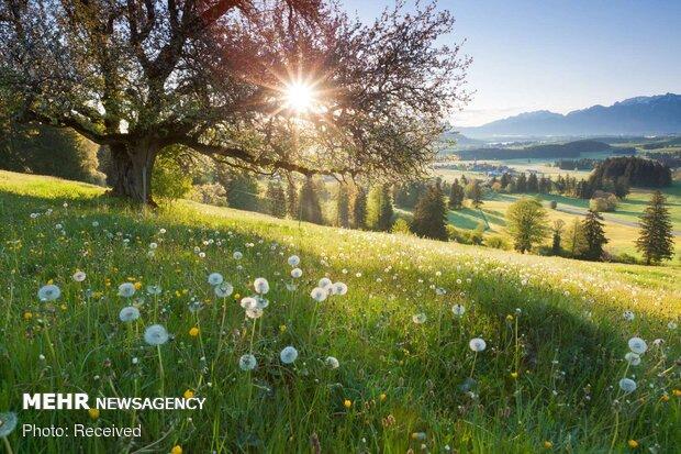 تصاویر بهاری از کشورهای مختلف دنیا