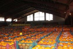 آغاز توزیع یکهزار تن پرتقال در آذربایجانشرقی