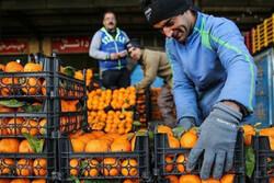 ۷۱ غرفه عرضه میوه شب عید در زنجان را بر عهده دارند