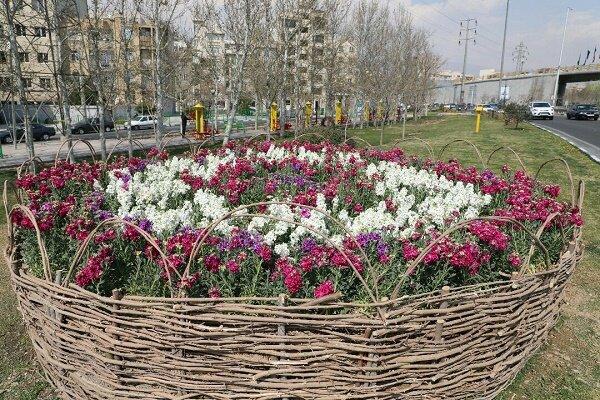 کاشت بزرگترین فرش گل ایران در بوستان ولایت