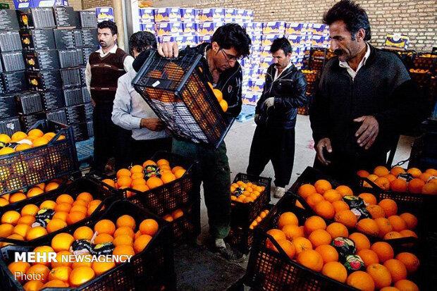توزیع میوه شب عید از ۲۴ اسفند ماه در زنجان آغاز می شود