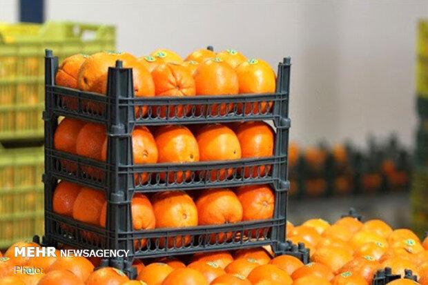 قیمت میوه تنظیم بازار در استان بوشهر کاهش یافت