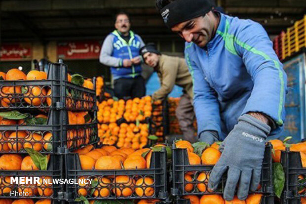 قیمت انواع مرکبات در میادین میوه و تره بار تهران اعلام شد