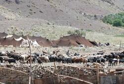 آبرسانی به ۸۹ محله عشایری خراسان جنوبی/تولید ۷۰ هزار تن گوشت قرمز