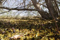 مبارزه با ملخ صحرایی در ۱۷۵ هزار هکتار از مراتع سیستان وبلوچستان