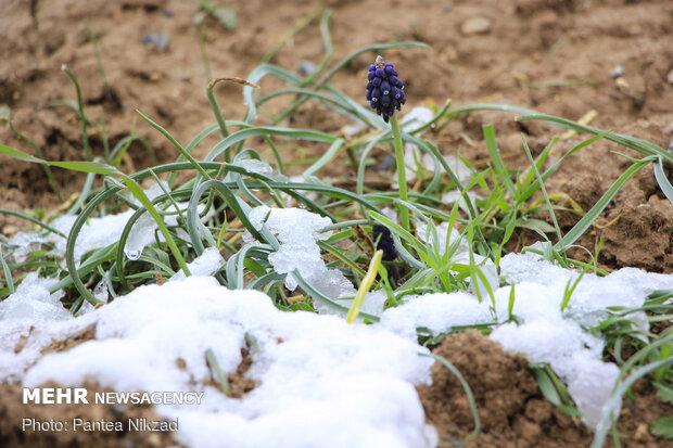 قابِ زمستانیِ بهار