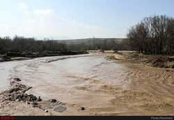 خسارت ۳۶۳ میلیارد ریالی سیل و تگرگ به اراضی کشاورزی استان بوشهر