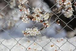 VIDEO: Springtime snow in Ardebil