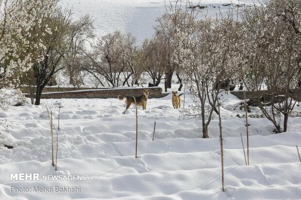 بارش برف بهاری در ارتفاعات قم