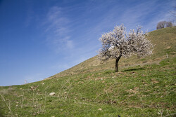"نشاط الربيع في سهول ""كردستان"" غرب ايران / صور"