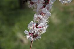جوانییەکانی سروشتی کوردستان
