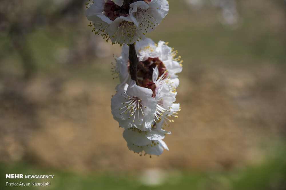 تلالو رنگها در بهار کردستان