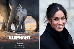 مگان مارکل مستند «فیلها» را روایت میکند