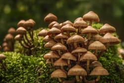 ۱۶ مورد مسمومیت با قارچ های سمی در کرمانشاه