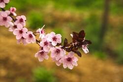 Baharın gelişini yansıtan fotoğraflar