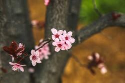 بجنورد میں بہار کے شاندار جلوے