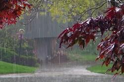 ثبت ۳۹۰ میلیمتر بارش باران طی سال آبی جاری در استان بوشهر