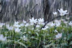 تداوم بارندگیها در کرمان/ خیزش گرد و خاک در شرق استان