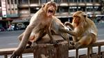 Karantina günlerinde sokakları hayvanlar doldurdu!