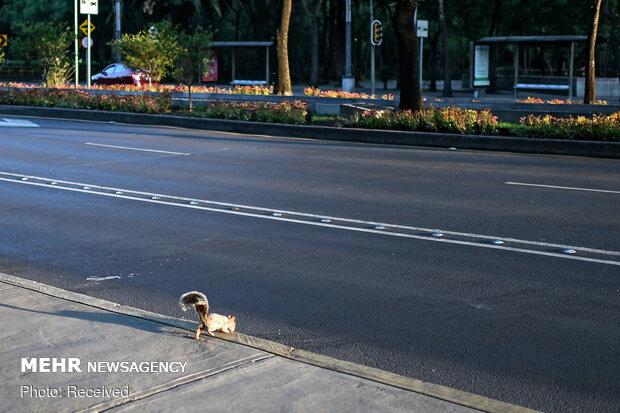 Karantina günlerinde şehirlerde hayvan varlığı